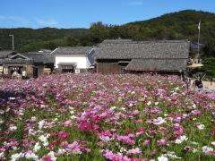 shoudoshima031.jpg